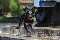 Dock-9 (Eurosportk9) Tags: canada on manotick