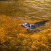 Minnewaska State Park - Wawarsing, NY - 2012, May - 07.jpg by sebastien.barre