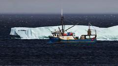"MV "" Northern Pride"" (Jerry Mouland) Tags: sea canada ice water canon newfoundland boats fishing fisherman iceberg icebergs bonavista canon500d fishingindustry whereyourefrom"