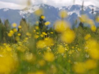 Spring Flower Frühling Blume Nature Natur Bayern Bavaria Germany