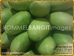 Green Mango IMG02102-20111029-1401 (Golden Eggs) Tags: photojournalism rightsmanaged melphoto rommelbangit daddypro rommelbangitimages