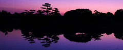 Japanese Island After Sunset Pano (Chris Smith/Out of Chicago) Tags: blue trees sunset summer reflection water silhouette japanesegarden pond symmetry bonsai symmetric pinksky chicagobotanicgarden chrissmith tamron28300mm niwaki 5dmark2 elizabethhubertmalottjapanesegarden