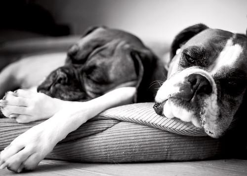 05.06.2012 - Lazy Day