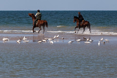 Sandbank gallop | Deauville | Blonville-sur-Mer to Honfleur-11 (Paul Dykes) Tags: normandy coast coastal seaside sea france may 2016 spring deauville sandbank horses horse beach plage gallop gull seagull mouette cheval chevaux spray galop riders horseriders horseriding