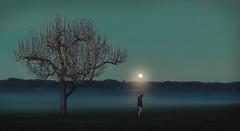 already or still (ichmachfilm) Tags: moon selfportrait tree fog night surreal storytelling