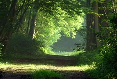 2016-05-13 Secret wood (48)morning light (april-mo) Tags: wood light mist lumire bois