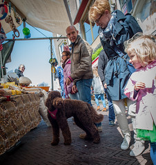 Labradoodle @ Leiden market (PaulHoo) Tags: street city urban dog pet holland netherlands animal leiden nikon child market candid citylife streetphotography curious labradoodle attention interest lightroom 2016 streetcandid d700