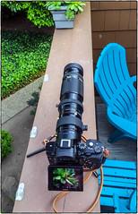 Sony & Nikkor (NoJuan) Tags: cameraportrait cameraporn lensporn effectedcamera