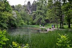 DSC_0828 (Me now0) Tags: park nikond5300 никонд5300 юженпарк софиябългарияевропа езеро дъжд lake rain 1855mmf3556