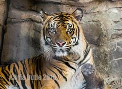 DSC00084 (montusurf) Tags: pose portrait face waco cameron park zoo