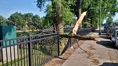 Tree Limb Down in Fuller Park #5 (artistmac) Tags: park street chicago tree fence illinois outdoor wroughtiron il repair fallen southside bent limb fuller fullerpark michaelbrown superintendent workorder blowndown hispark lethimactlikeitforachange