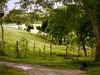 far from civilization me feel more civilized... (CaiU) Tags: trees tree verde nature field bike bicycle forest landscape thought alone peace place natureza paisagem arvore floresta pensando pensamento