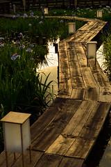 37Yamada Pond Park (anglo10) Tags: sunset flower japan