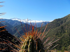(*paz) Tags: chile cactus mountain green nature