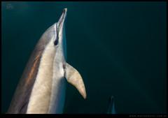 Delfin me mira