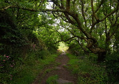 DSC05808 (Glasss Magic) Tags: greatbritain england green countryside cornwall unitedkingdom britain cornish coastpath travelphotography travelphoto
