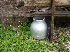Sous le vieux banc (MAPNANCY) Tags: lait banc verdure bidon