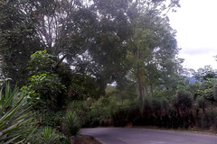 Una curva del camino/A turn of the way (vantcj1) Tags: naturaleza camino cielo vegetacin curva ladera