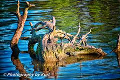 _DSC3088 (Photography by Kurt) Tags: reflection water misc stump safe