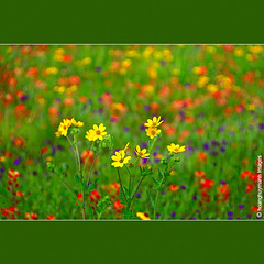 Black Eyed Susan (HoangHuyManh images) Tags: flowers copyright niceshot blackeyedsusan yellowgroup finegold bluegroup flickrgoldaward greengroup flickrsilveraward platinumheartsaward whitegroup andromeda50 bestcapturesaoi doublyniceshot elitegalleryaoi theelitegalleryaoi mygearandme mygearandmepremium mygearandmebronze mygearandmesilver mygearandmegold mygearandmeplatinum hoanghuymanhimages goldstarawardlevel1 goldstarawardlevel2 dblringexcellence theverybestpeoplechoice level3photographyforrecreation level4photographyforrecreation level5photographyforrecreation artistoftheyearlevel2 chariotsofartistslevel2 finestdiamond theelitephotographerlevel2 0eliteclub 1eliteclub artistoftheyearleve4doubleplatinum andromeda50finallevel chariotsofartistslevel3 level2photographyofrecreation artistoftheyearleve3 yourarthastouchedtheworldlevel4 universalelitelevel5 flickrsuperstartalentlevel2 4timesasnice 5timesasnice theelitephotographerlevel5 fineplatinumlevel2 tripleniceshotlevel3 theelitephotographerlevel3 chariotsofartistslevel4 theelitephotographerlevel4 doubleringexcelence c