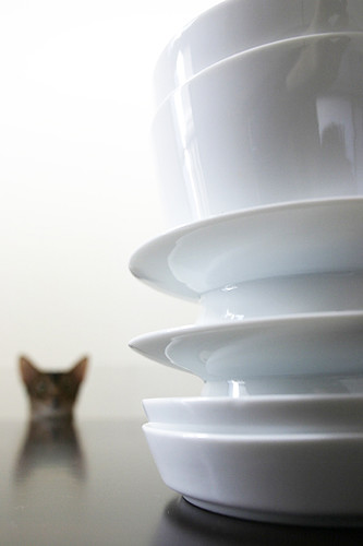 A white vessel _cat_0872