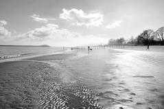 Has Been (floralgal) Tags: blackandwhite seascape landscape sand tide persons dramaticsky sandprints manwithdog longislandsound ryenewyork westchestercountynewyork
