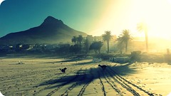 Weekend & Dogs = Fun (whats_ur_flava2000) Tags: sun beach sunshine sunrise fun capetown lionshead campsbay kapstadt hss happysliderssunday