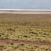 22 laguna miscanti vigogne