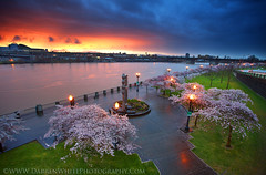 Portland Spring Rains (Darren White Photography) Tags: storm clouds oregon sunrise canon portland outdoors spring northwest cityscapes pdx portlandoregon raining willametteriver springtime cherrytrees inbloom portlandwaterfront darrenwhite northwestlandscapes darrenwhitephotography 5dmkii landscapesofthenorthwest