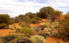 immer wieder grün- green again and again (Anke knipst) Tags: australia outback australien wüste