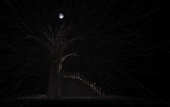 Tribute To Stoker by nessuno myoo (Nessuno Myoo) Tags: sculpture art 3d dracula secondlife virtual stoker nessunomyoo