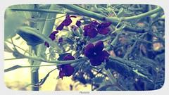 photorim_1 (omar aljumaily) Tags: crystalheart