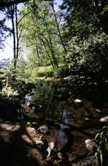 vivitar3 (390 x 600) (kinetograph) Tags: nature bc toycamera burnaby brook unspoiled deerlakepark vivitarultrawideslim vivitarultrawide