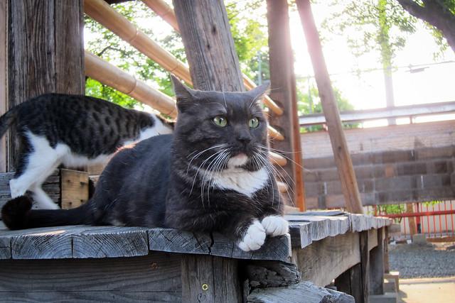 Today's Cat@2012-05-15
