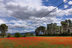 Our red carpet (decar66) Tags: flowers red primavera clouds spring mediterranean poppies poppyfields hdr redcarpet ontinyent amapolas amapola adormidera onteniente lavalldalbaida campodeamapolas salvabarbera