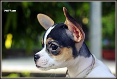 Pup (Phil-V.com) Tags: portrait dog art dogs colors beautiful beauty animal animals wow wonderful puppy fun amazing cool nice interesting intense artwork warm artistic awesome creative adorable explore imagine imagination elegant interest exciting fascinating outstanding intensive fascinated loveley fascinate