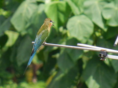 Cute Twitter Bird.. (kickirman) Tags: cute twitter twittering birdbusy