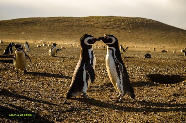 Lindos Pinguinos