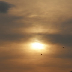 Moving Swiftly Along... (Annie in Beziers) Tags: sky birds clouds flying languedoc swifts settingsun hrault flypast bziers thisevening annieinbziers frommyroofterrace