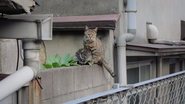 Today's Cat@2012-05-28