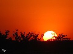 May 26, 2012 Sunset (cweav59) Tags: trees sunset oklahoma nature landscape cantonlake