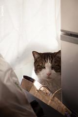 My Friend's Cat  Jerry / Tokyo, Japan (yameme) Tags: travel pet japan cat canon eos tokyo jerry  shinagawa   meguro    nishikoyama 24105mmlis   5dmarkii 5d2