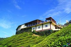 Bharat Tea Plantation, Cameron Highlands - DSC03338 (Defarhano VII) Tags: kilang ladangtehcameronhighlands bharattehplantation kilangtehdicameronhighlands