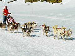 Alpe Huez Sled Dogs (Patrice BALARD) Tags: dog chien snow france dogs alpes action neige sled alpe dhuez chiens rhone traineau huez rhnealpes traneau