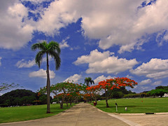 flamboyan (juliealicea1947) Tags: puertorico flametree flamboyan nationalcemetery