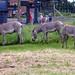 Southwick's Zoo...