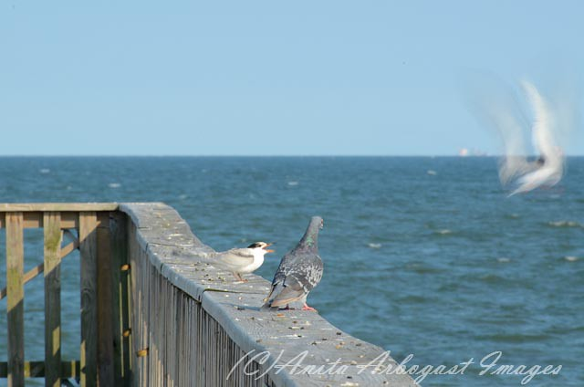 The world 39 s best photos of buckroe and hampton flickr for Buckroe beach fishing pier