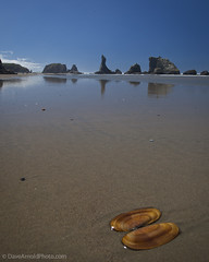 Forgotten item (Dave Arnold Photo) Tags: ocean sea usa oregon bay coast us photo pacific image or arnold picture pic photograph oregoncoast bandon ore coquille coos wildlifepreserve lomgexposure davearnold centraloregoncoast uspark oregonislands darnold coquillepoint davearnoldphotocom