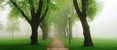 montebello park (Rex Montalban Photography) Tags: ontario fog niagara stcatharines montebellopark rexmontalbanphotography