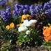 C'est déjà le printemps à Pornichet !